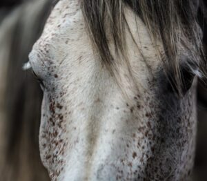 Read more about the article International Equine Touch Awareness Day