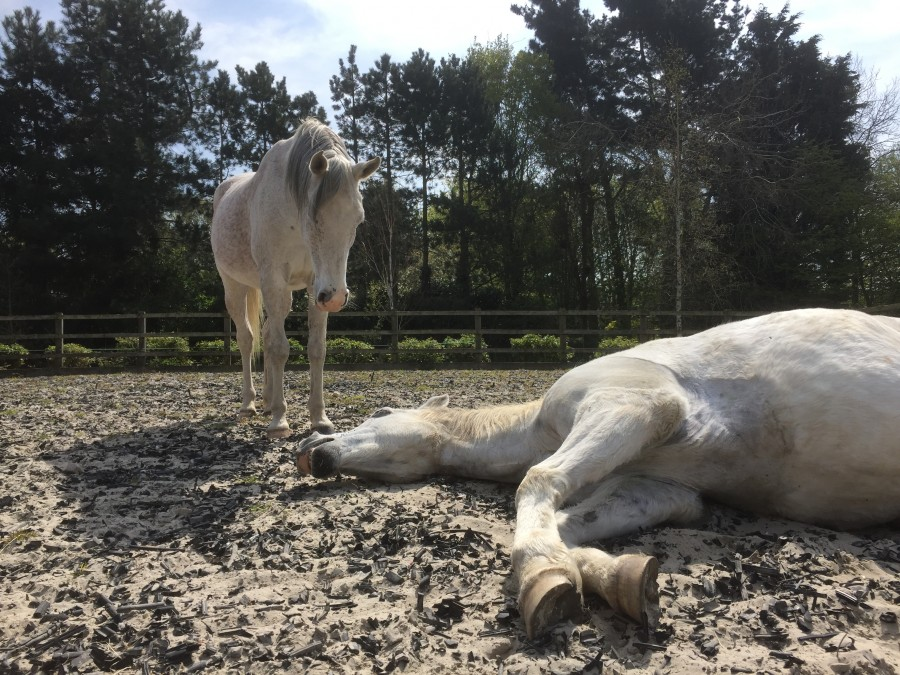 Read more about the article Equi Anima Essence – part 5  Help from the Horses and a Full Pink Moon